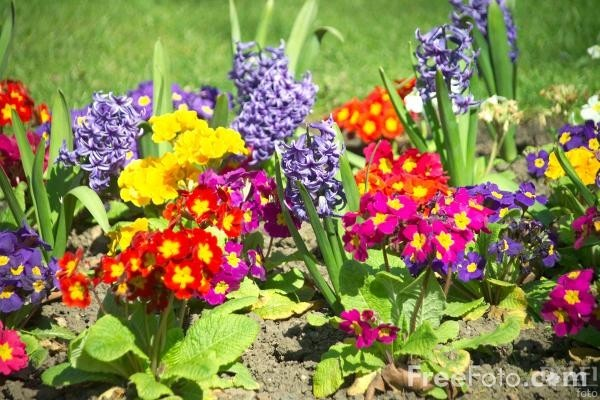 12_13_4---Flowers-in-a-Garden-Border_web