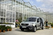 citan4