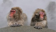 JAPAN-MONKEYS-AT-HOT359901