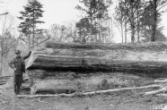 Superintendent of woods work for the Cypress Lumber Company