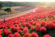 Hitachi Seaside Park - 25