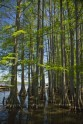 Caddo lake - 1