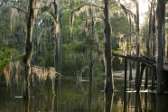 Caddo lake - 2
