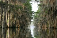 Caddo lake - 5