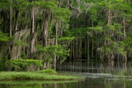 Caddo lake - 6