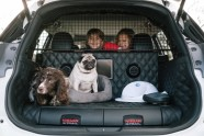 Nissan X-Trail 4Dogs - 1