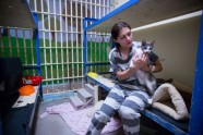 Maricopa Animal Safe Haven - 1