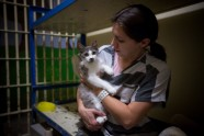 Maricopa Animal Safe Haven - 2