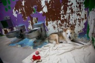 Maricopa Animal Safe Haven - 4