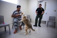 Maricopa Animal Safe Haven - 12