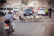 Welcome to Dahab!